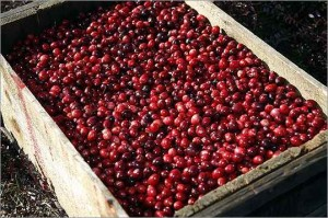 Cranberries:  The Most Festive Holiday Fruit