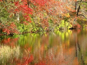 Fall Reflections on a Cape Cod Pond