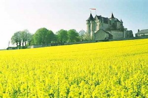 A Perfect French Summer Scene:  Colza Fields Blanketing the Château de la Motte d'Usseau Landscape