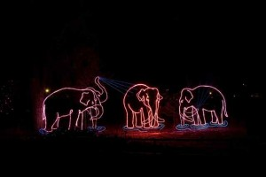Illuminated Elephants at the Denver Zoo