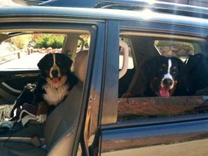 DaVinci & Valentino Heading Out on One of Their Road Trips
