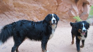 Hiking with the Pups in Moab