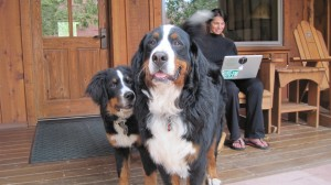 The Pups and Me:  Riverfront Porch at Sorrel