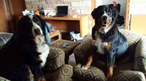 Tino and DaVinci at Home at Country Lodge Montrose