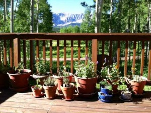 A Selection of Our Plantings on Steve's Deck