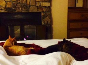 Leo and Clara Relaxing with Me at the Lodge in Front of the Fire