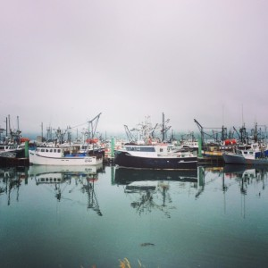 The Scallop Boat Fleet in Digby